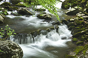 Lush Green Posters - Smoky Mountain Rapids Poster by Andrew Soundarajan