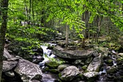 Roaring Fork Prints - Smoky Mountain Stream 5 Print by Mel Steinhauer