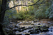 Gatlinburg Tennessee Prints - Smoky Mountain Stream Print by Debbie Karnes