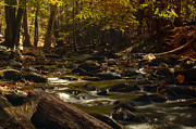 Patrick Shupert Metal Prints - Smoky Mountain Stream Metal Print by Patrick Shupert