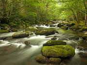 Smoky Mountain Stream Print by Phyllis Peterson