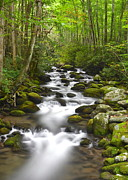 Motor Nature Trail Posters - Smoky Mountain Stream Poster by Robert Harmon