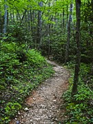 Green Foliage Prints - Smoky Mountain Trail Print by Robert Harmon