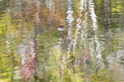 Smokies Prints - Smoky Mountains Reflections Print by Rosemary Williams