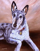 Collie Drawings Posters - Smooth Coat Collie Poster by Sharon Molinaro
