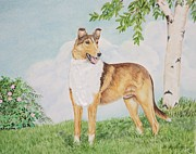 Collie Painting Framed Prints - Smooth Collie Framed Print by Heather Anderson