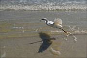 Bird Art - Smooth Takeoff by Margaret Jones