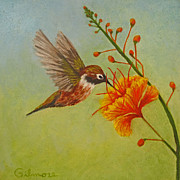 Humming Bird Prints - Snack Time Print by Roseann Gilmore