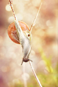 HJBH Photography - Snail balancing on branches
