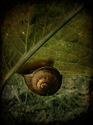 Barbara Orenya Prints - Snail camp Print by Barbara Orenya
