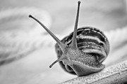 Checking Photos - Snail by Nailia Schwarz