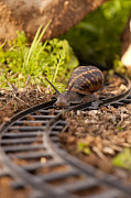 Toy Train Prints - Snail on train tracks  Print by Guy Viner