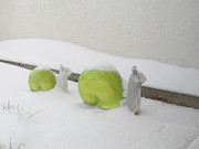 Art Photography Prints - Snails in Snow Print by Art Photography