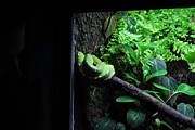 Snake Photo Framed Prints - Snake - National Aquarium in Baltimore MD - 12124 Framed Print by DC Photographer