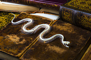 Books Framed Prints - Snake skeleton and old books Framed Print by Garry Gay