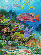 Yellowtail Framed Prints - Snapper Reef Re0028 Framed Print by Carey Chen