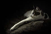 Jens Tischer - Sneak Around Cat