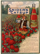 Featured Metal Prints - Sniders Catsup 1920s Usa Cc Tomatoes Metal Print by The Advertising Archives