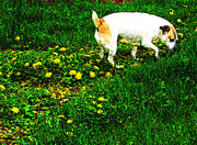 Sniffin The Dandelions Print by Minding My  Visions