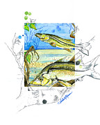 Moran Mixed Media Prints - Snook Print by Amber M  Moran