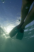 Snorkeling Photos - Snorkeller legs with flippers underwater by Sami Sarkis