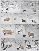 Snow On Trees Prints - Snow Angels Paso Fino Style Print by Patricia Keller