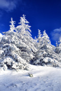 Snow Covered Pine Trees Prints - Snow Blanket Highland Scenic Highway Print by Thomas R Fletcher