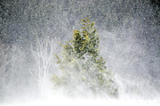 Snow Scene Metal Prints - Snow Blown Metal Print by Emily Stauring