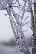 Fort Collins Prints - Snow Branches Print by Krista Sidwell