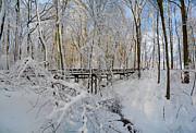 Raymond Salani III - Snow Bridge