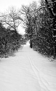 Snow Covered Forest Trail Print by ImagesAsArt Photos And Graphics