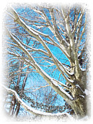 Winter Scene Digital Art Prints - Snow Covered Holiday  Print by Shawna  Rowe