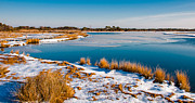 Winter Travel Pastels Prints - Snow covered marsh at Assateague Island National Seashore Maryland Print by Jon Bilous