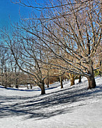 Tim Buisman Art - Snow Covered Park by Tim Buisman