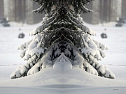 Yard Decorations Posters - Snow Covered Tree Branches Mirror Image Poster by Thomas Woolworth