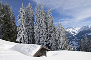Snow-covered Landscape Prints - Snow covered trees and mountains in beautiful winter landscape Print by Matthias Hauser