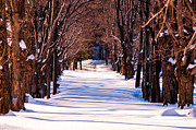 Lee Costa Acrylic Prints - Snow covered way Acrylic Print by Lee Costa