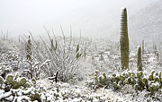 Rincon Photos - Snow Day in the Desert  by Saija  Lehtonen