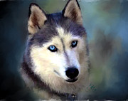 Husky Dog Paintings - Snow Dog by Robert Smith