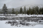 Snow-dusted Gibbon Meadows In Yellowstone Print by Bruce Gourley