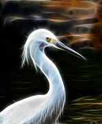 Fractalius Framed Prints - Snow Egret Framed Print by Shane Bechler