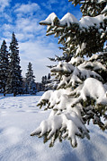 Fall Photographs Prints - Snow Fall Print by Terry Elniski
