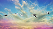 Geese Digital Art Prints - Snow Geese Over New Melle Print by Bill Tiepelman