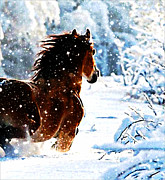 Michael Mixed Media Posters - Snow horse Poster by Michael Knight