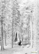 Snow Impressions Print by Angela Stanton