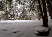 Snowed Trees Photos - Snow in Shade  by Tim  Fitzwater