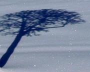 Gail Matthews - Snow is glistening