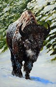 Bison Originals - Snow King by Gary Melvin
