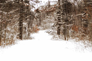 Snow-covered Landscape Digital Art Posters - Snow Lane Poster by Mary Timman