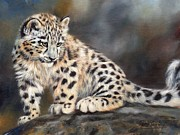 Big Cats Paintings - Snow Leopard Cub by David Stribbling